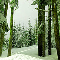 Snow In The Forest by Jeff Swan