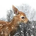 Snowing by Lisa Hurylovich