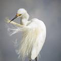 Snowy Egret Marco Island Florida by Toni Thomas