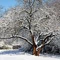 Snowy Tree by Terri Morris