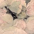 Soft Pink Peonies by Jeannie Rhode