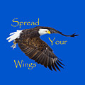 Spread Your Wings by Greg Norrell