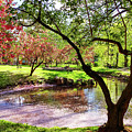Spring At Tappan Park Pond by Roger Bester