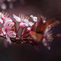 Spring Beauty- 2 by Calazone's Flics