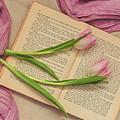 Spring Beauty 2 by Kim Hojnacki