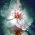 Spring Flowering by Lali Kacharava
