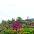 Spring Flowers by Artur Gjino