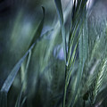 Spring Grass Emerging by Sheryl Karas