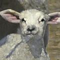 Spring Lamb by John Reynolds