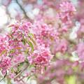 Spring Lightness by Jenny Rainbow
