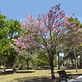 Spring Magnolia In Winter Park  by Allan  Hughes