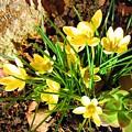 Spring by Vesna Martinjak