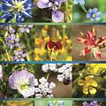 Spring Wildflowers II by Stephen Anderson