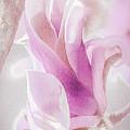 Springtime Magnolia Bloom by Julie Palencia