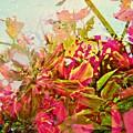 Springtime by Meiers Daniel