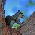 1- Squirrel by Joseph Keane