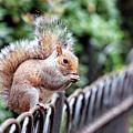 Squirrel by Paul Fell