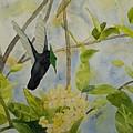 St. Lucian Hummingbird by Laurel Best