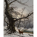 Stag In A Snow Covered Wooded Landscape by MotionAge Designs