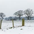 Standing In The Snow by Raelene Goddard