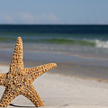 Starfish Standing On The Beach by Anthony Totah