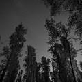 Stargazing Thru The Trees by Michael Ver Sprill