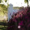 Cape Farm Courtyard  by Runaldo Ferre