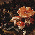 Still Life With Serpents, Fly Agarics And Thistles by Paolo Porpora
