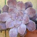 Stone Flower by Laurette Escobar