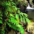 Stream El Yunque National Forest by Thomas R Fletcher