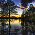 Stumpy Sunset by Pete Federico