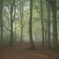 Stunning Colorful Moody Vibrant Autumn Fall Foggy Forest Landsca by Matthew Gibson