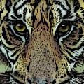 Sumatran Tiger by Arline Wagner