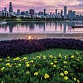 summer flowers and Chicago skyline by Sven Brogren