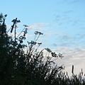 Summer Hedgerow by Lynne Iddon