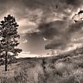 Summer Skies by Tara Turner