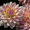 Sun And Flowers by Robert Ullmann