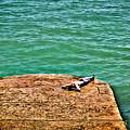 Sun Bathing by Paul Stevens