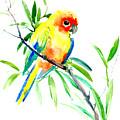 Sun Parakeet by Suren Nersisyan