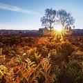 Sun by Svetlana Sewell