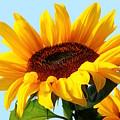 Sunflower  by Heike Hultsch