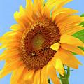 Sunflower Joy by Regina Geoghan