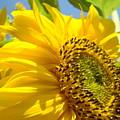 Sunflowers Art Prints Sun Flower Giclee Prints Baslee Troutman by Baslee Troutman