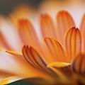 Sunlit by Jess Kruk