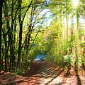 Sunny Autumn Path by Robert Anastasi