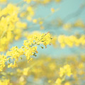 Sunny Blooms 2 by Sylvia Coomes