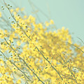 Sunny Blooms 3 by Sylvia Coomes