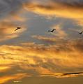 Sunset Flight by AJ Schibig