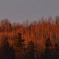 Sunset Glow by William Tasker