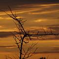 Sunset by John O'Brien